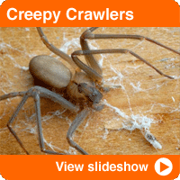 Creepiest Crawlers in Your Home