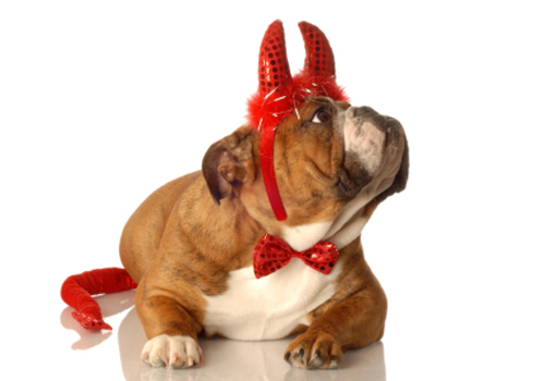 Your Dressed-Up Pet Pics