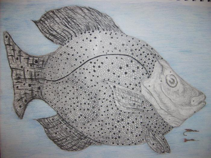 The Black Crappie done in black pencils