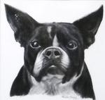 Drawing of Bugsy by Dr. Cheng