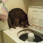 Beau checking out washing machine: Why does this make so much noise?