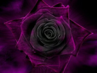against domestic violence rose