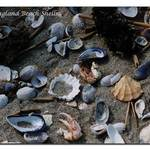 Beautiful Shells of the Sea