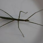 this is a walking stick.