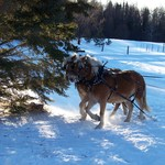 Logging with horses at our place. Merry Christmas!!!!