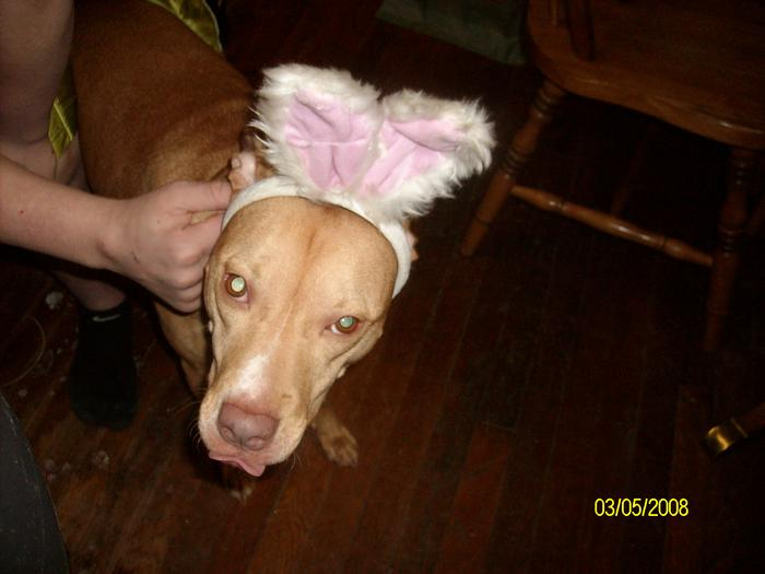 carly the easter DOG..