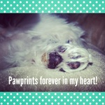Pawprints forever in my heart !