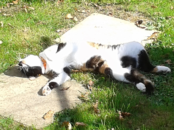 Tabitha having a lay in the sun