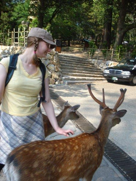 the deer at nara are cute... but very naughty!!