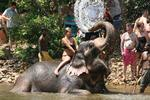 Elephant shower india