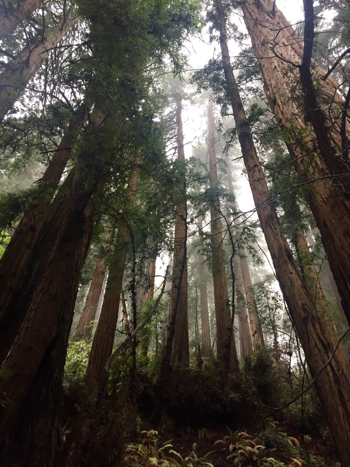 Muir Woods ~ April 2016