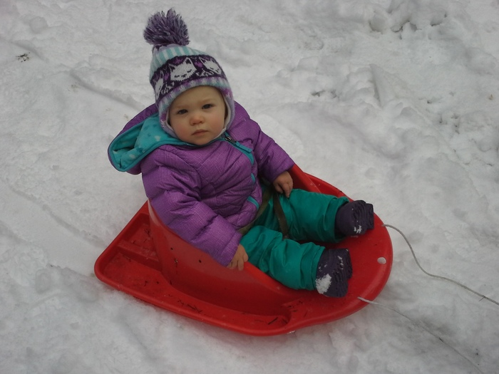 Amber On a Sled